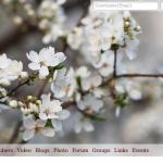Spring Theme 150x150 Скорый релиз Oxwall 1.2
